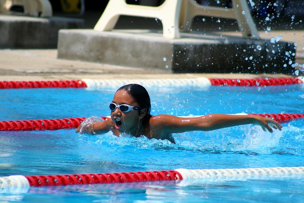 butterfly-schmetterling-schwimmen